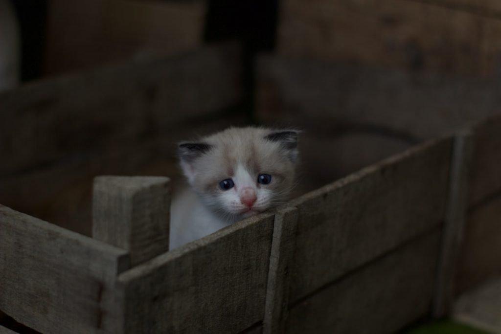 Best Dust Free Cat Litter For Asthma