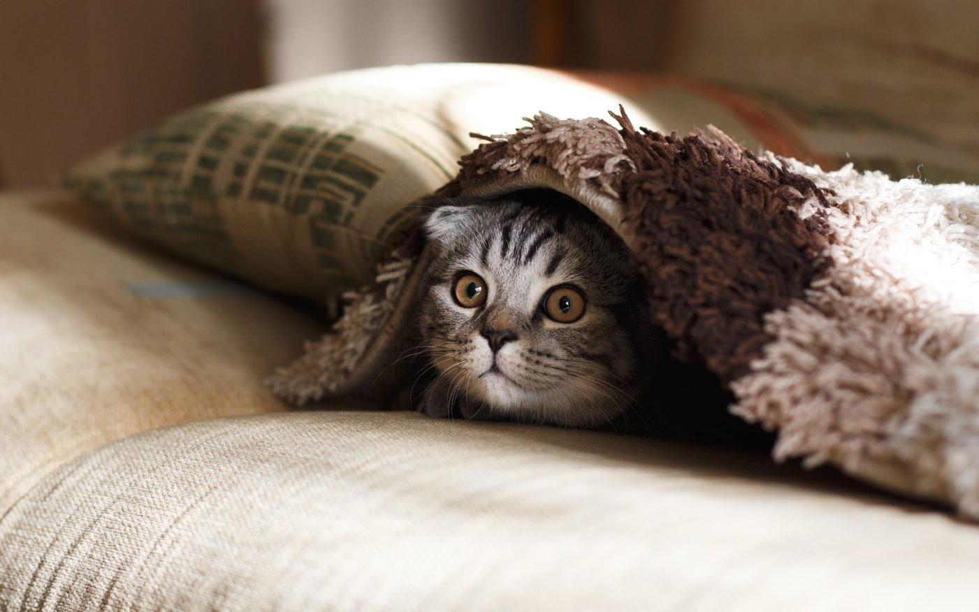 Should I Elevate My Cat's Food Bowl?