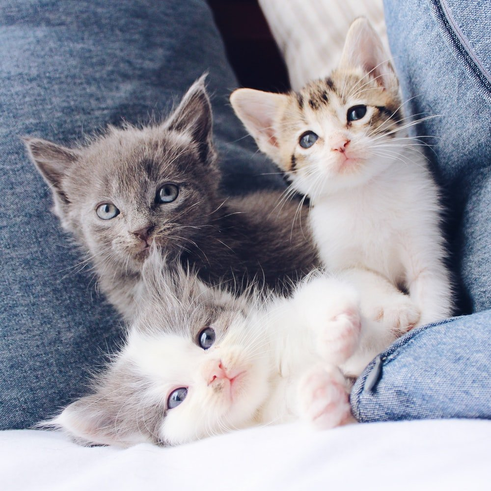 Best Kitten Treats For Training