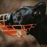 Will a Muzzle Stop My Dog From Whining?