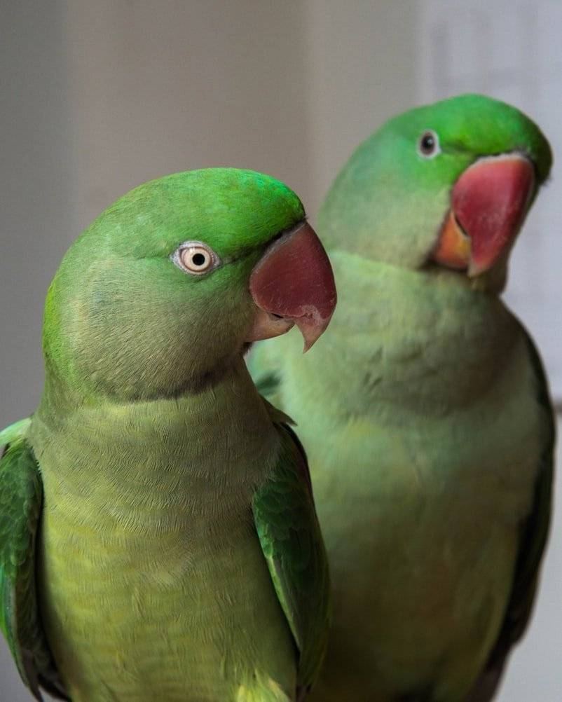 Best Parakeet Cage Setup