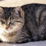 How To Get Rid Of Cat Poop Odor Outside