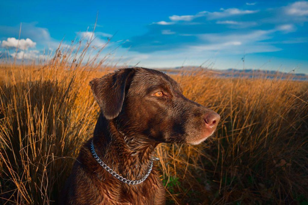 How To Help Blind Deaf Dog?