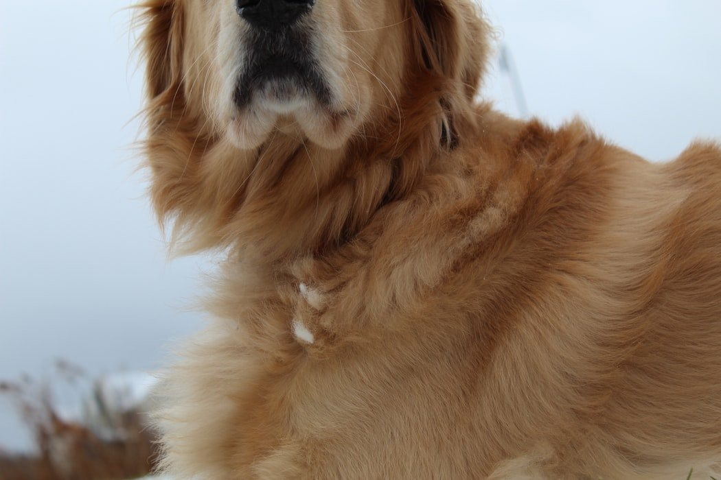 Best Calming Aid For Dogs With Separation Anxiety