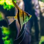 Best Air Pump For 100 Gallon Aquarium