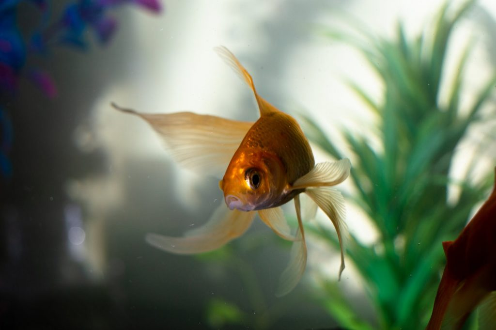Best Fish Tank For Toddlers