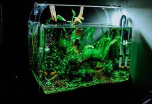 How To Clean Aquarium Gravel Algae