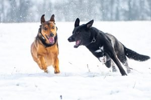 Best Undercoat Rake for German Shepherd