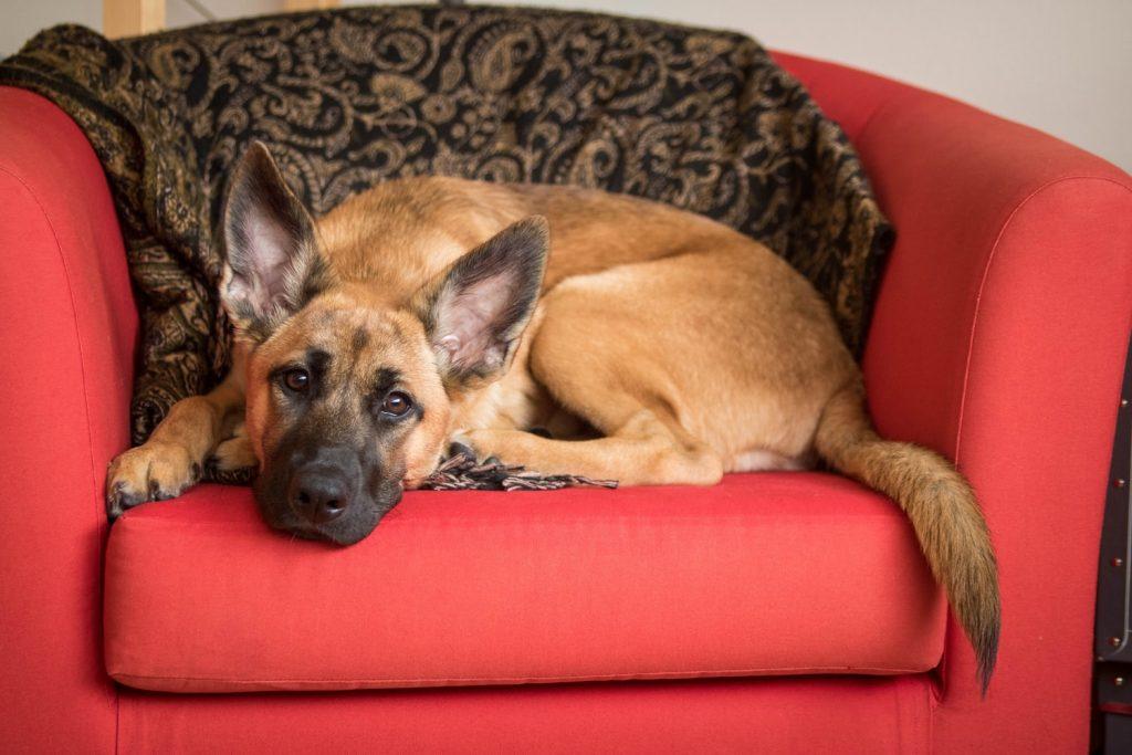 Best Dog Brush For A Shedding German Shepherd