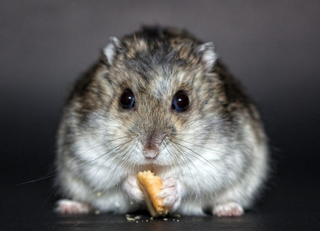 Best Hamster Handling Gloves