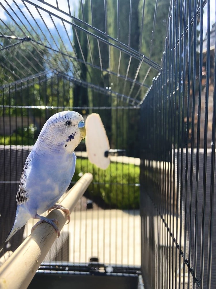 How To Get Rid Of Bird Mites On My Bird