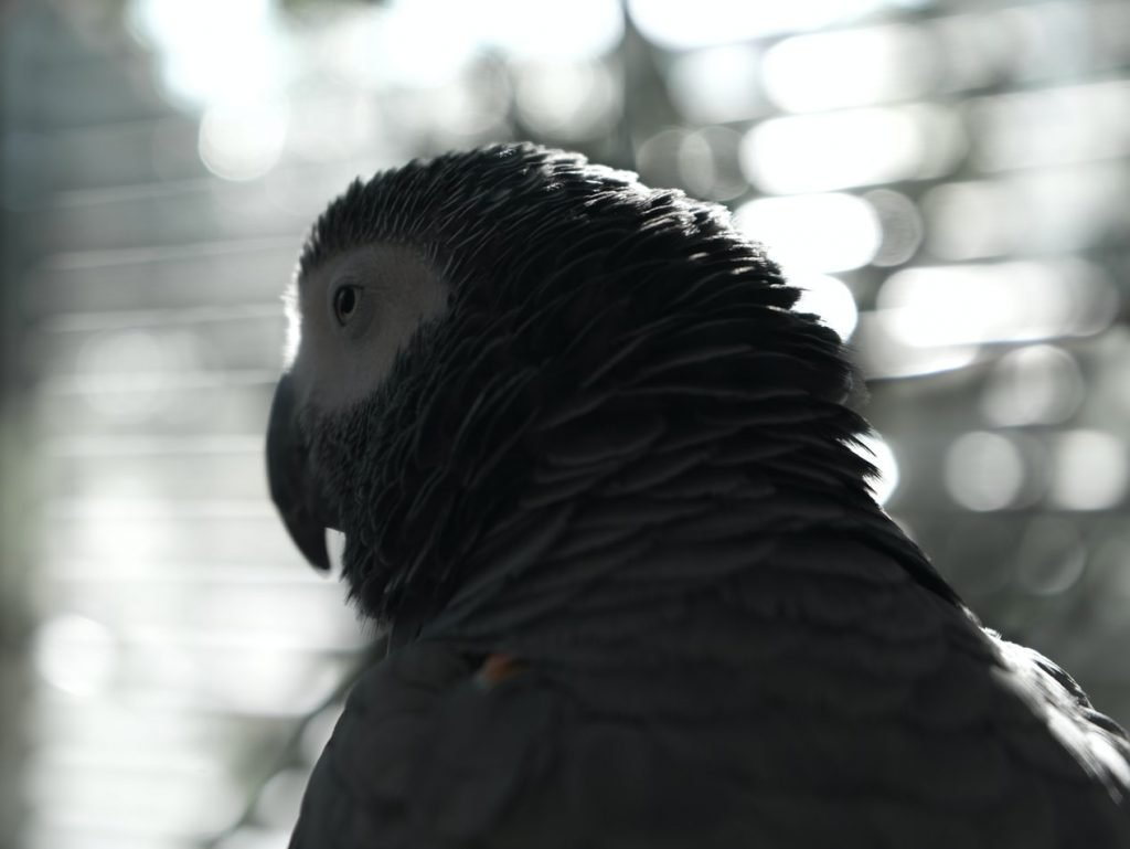 Best Air Purifier for African Grey Parrot