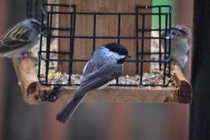 will vaseline keep squirrels off bird feeder