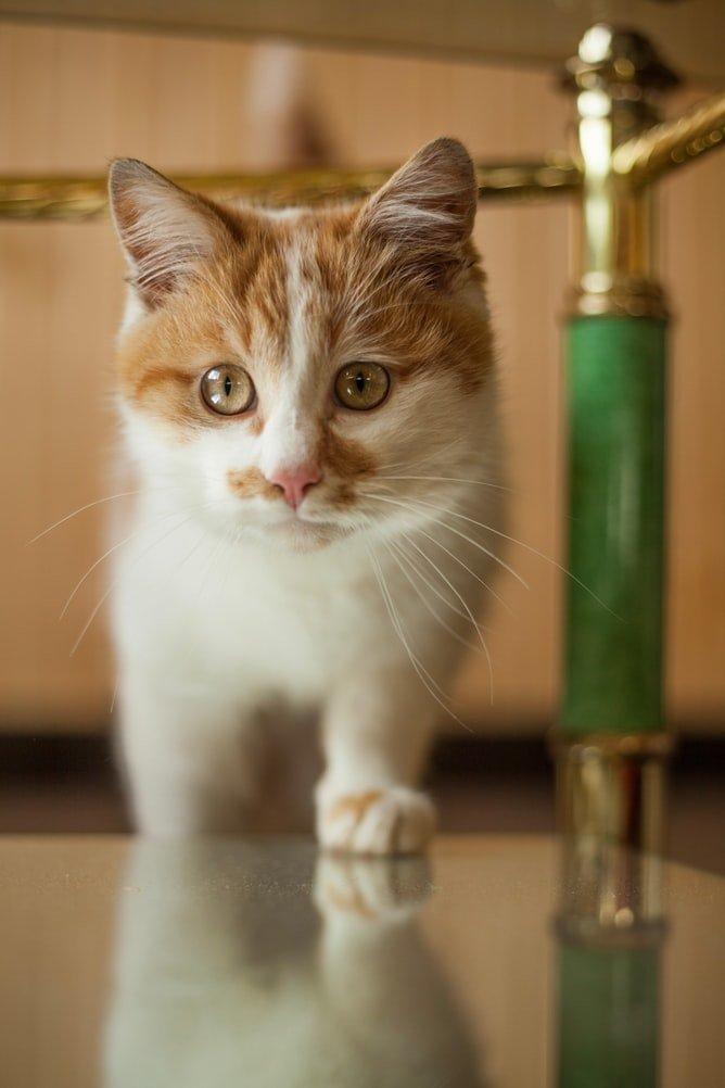 Best Air Freshener for Cat Urine