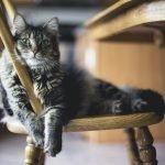 How To Give An Uncooperative Cat Liquid Medicine