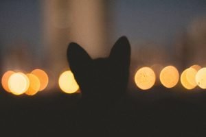 How To Get A Cat To Come Home At Night