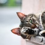 What Happens If You Don't Trim Your Cat's Nails? (And the Best Nail Clipper for Cats!)