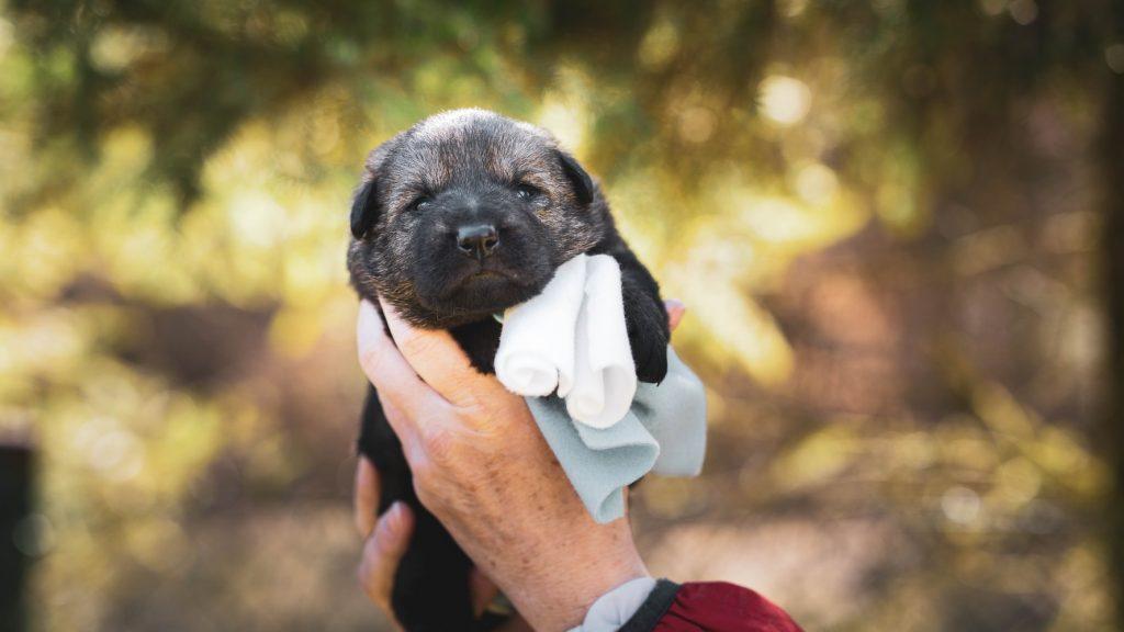 Safest Dog Crate For Home
