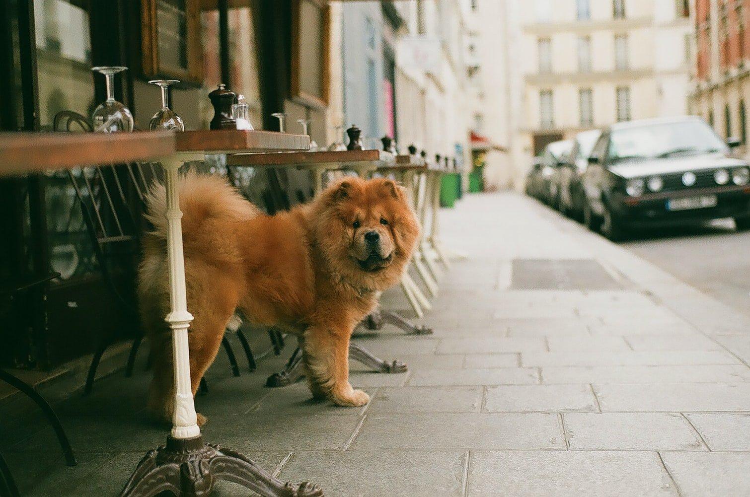 Best Dog Car Seat For Labrador