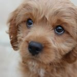 How Do I Know If My Puppy Will Survive Parvo? (And the Best Treatment!)