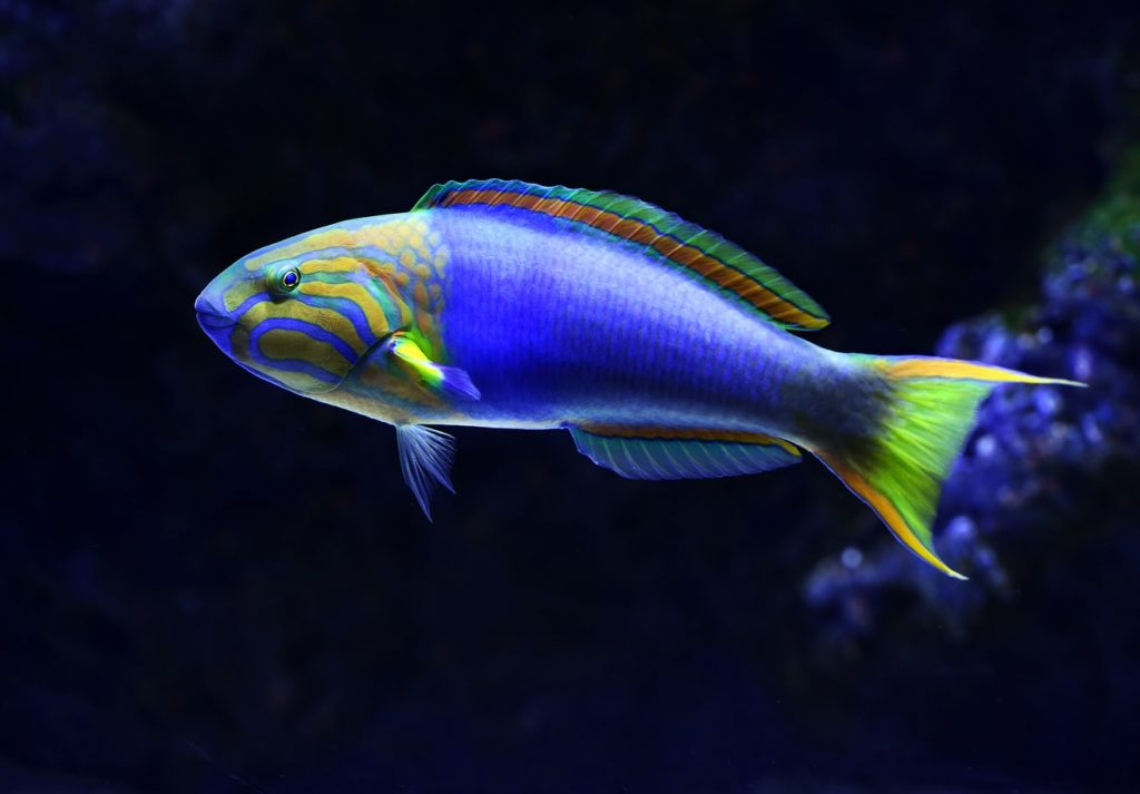 How To Lower Ammonia Levels In Saltwater Tank