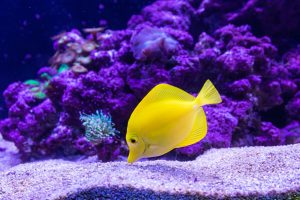 How To Fix A Cloudy Fish Tank