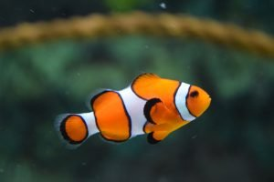 How To Heat Up Fish Tank Quickly
