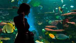 How To Get Rid Of Fish Tank Smell