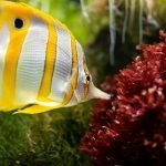 How To Cool Down A Fish Tank In The Summer (And Which Aquarium Cooling System Is Right For You!)