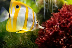 How To Cool Down A Fish Tank In The Summer