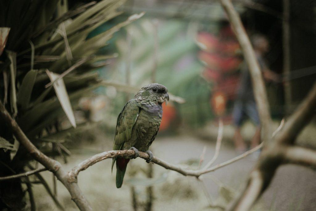 Best Bird Harness
