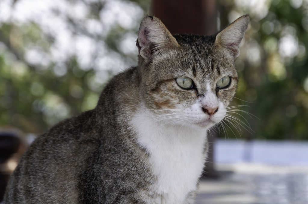 Mouthwash To Stop Cats From Peeing On Furniture