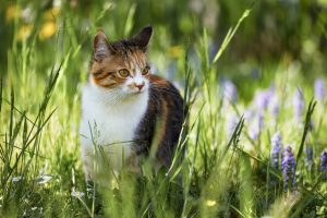 Are Greenies Good For Cats