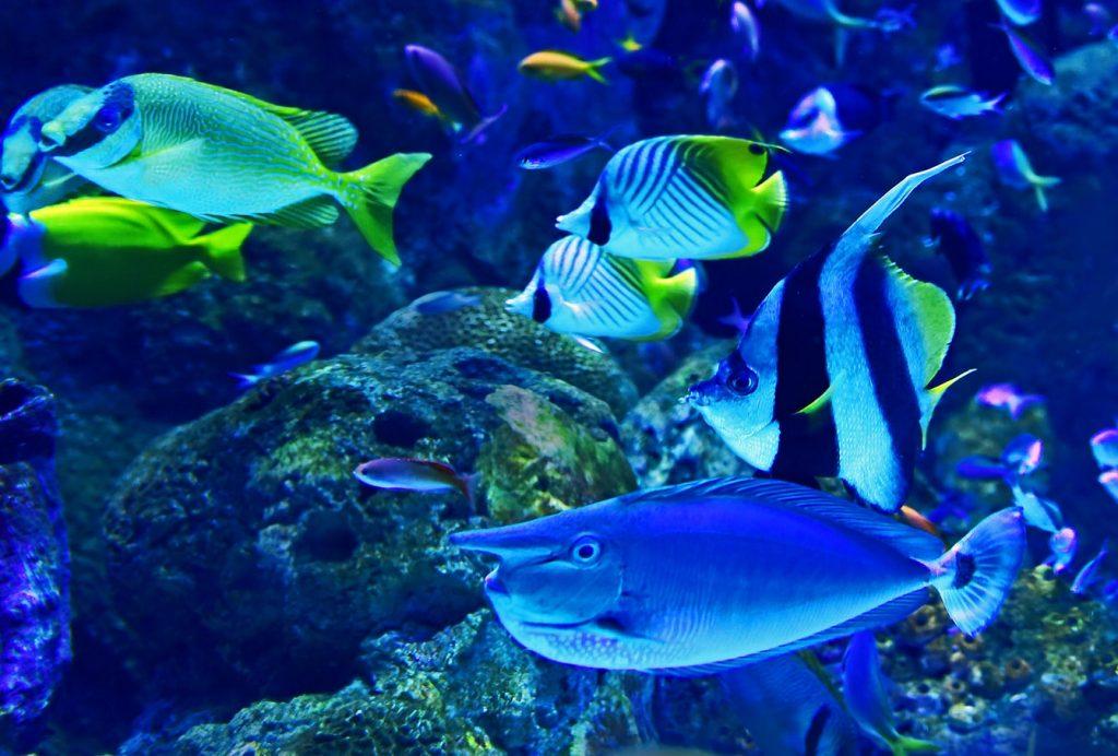 Best Aquarium Substrate For Plants