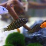 Epsom Salt Vs Aquarium Salt - Which One For Your Fish Tank?