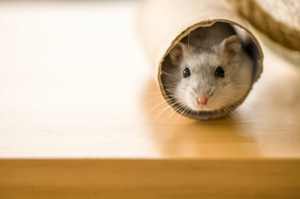 How To Help Hamster With Dry Skin