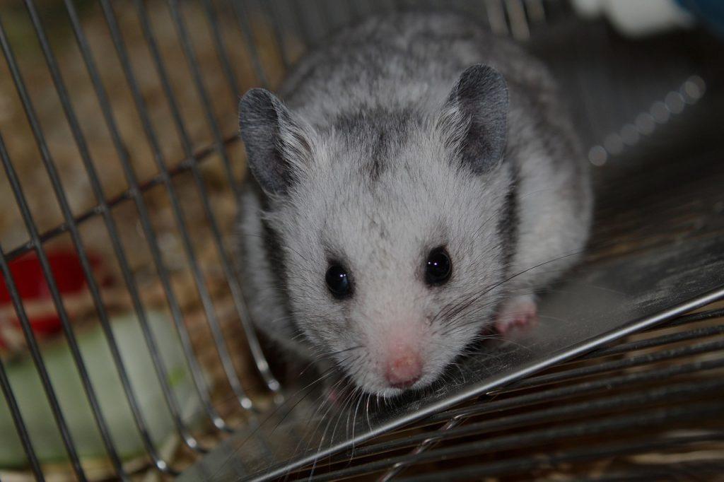 Hamster Not Running On Wheel