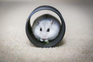 How To Make A Hamster Like You