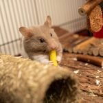 5 Tips On How To Keep Hamster Warm In Cold House