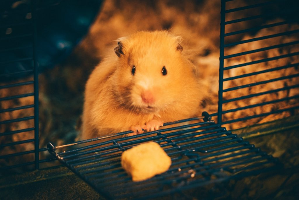 Hamster Biting Cage At Night
