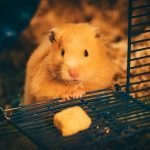 Why Is Hamster Biting Cage At Night? (And How to Stop It!)