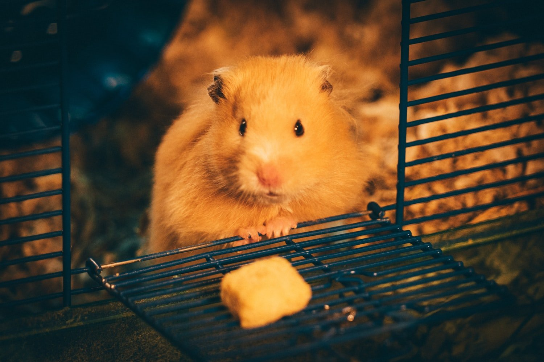 Hamster Biting Cage At Night