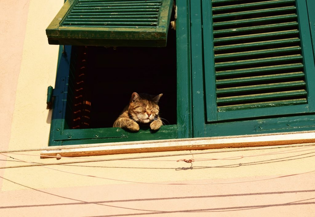 Best Outdoor Cat Enclosure Attached To Window