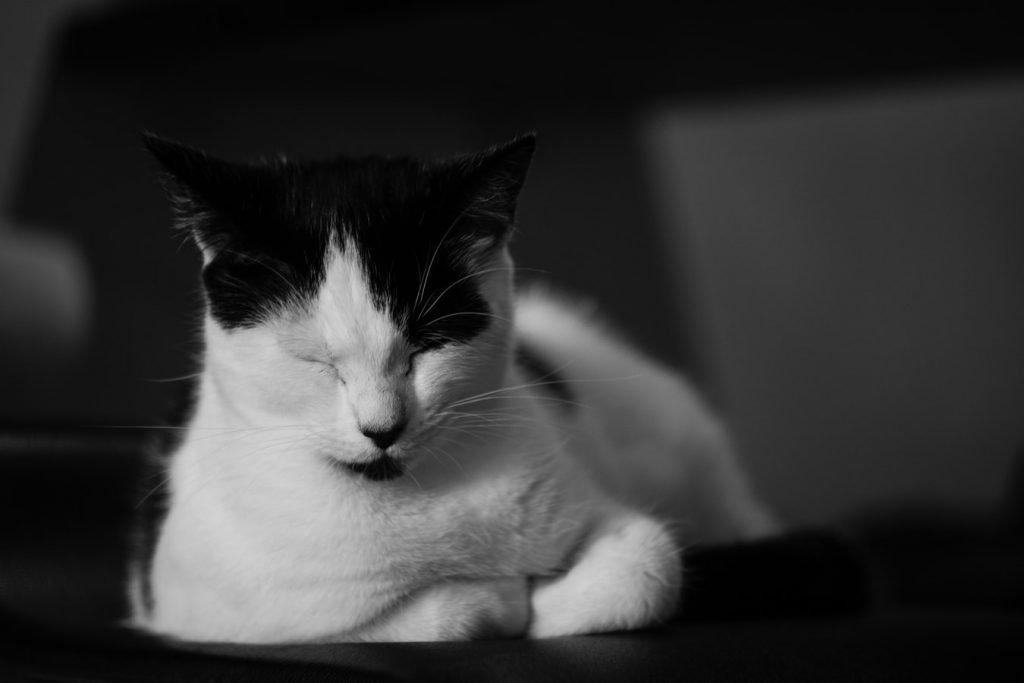 Kitten Poop Smells Like Death