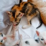 Why Are Kittens Still Nursing At 12 Weeks?