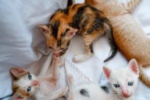 Kittens Still Nursing At 12 Weeks