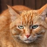 Reasons Why Your Cat Starts To Eat Then Runs Away (And How To Help!)