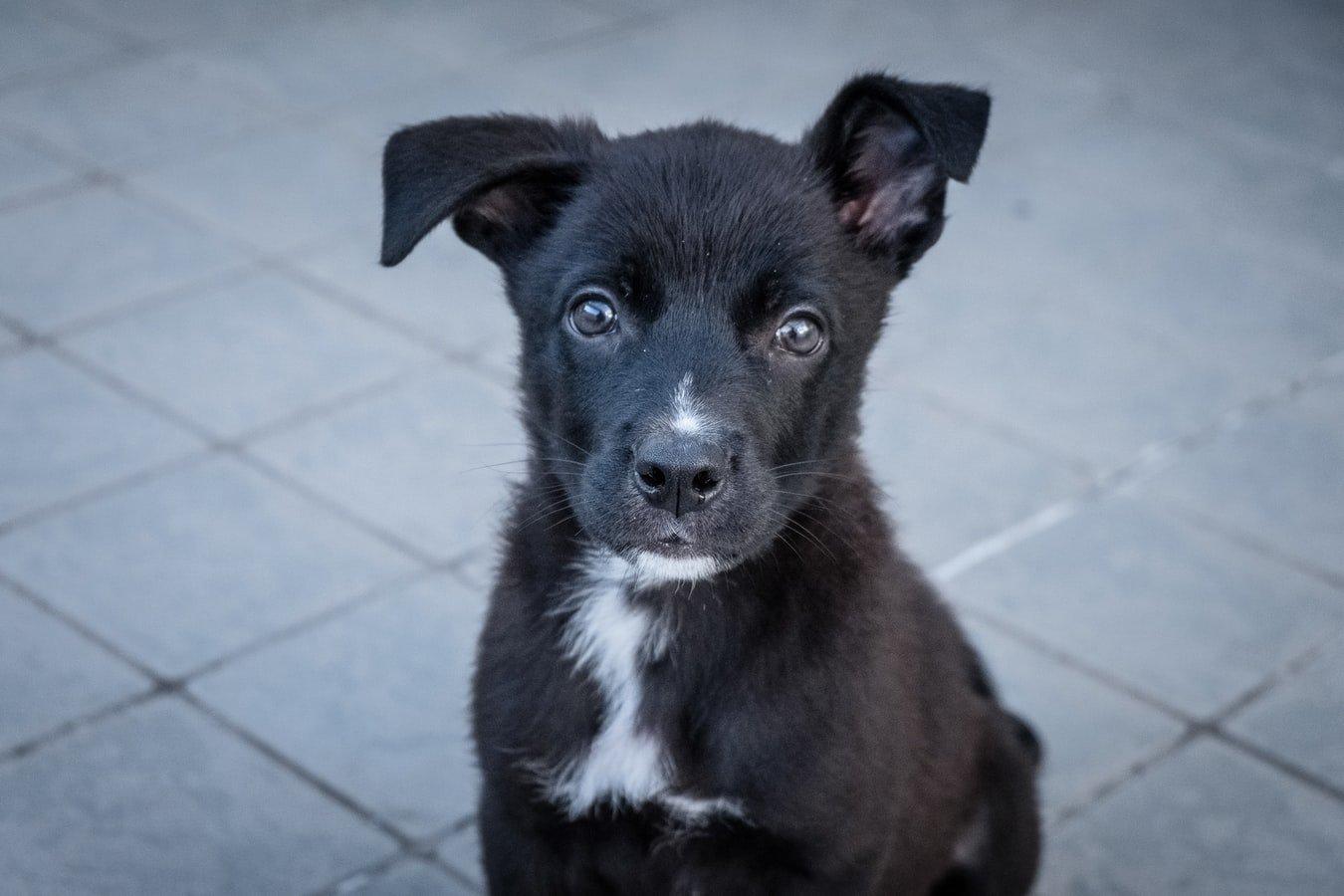 Giardia In Puppies Not Going Away