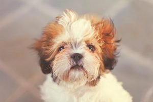 Why My Dog Growled At Me For The First Time