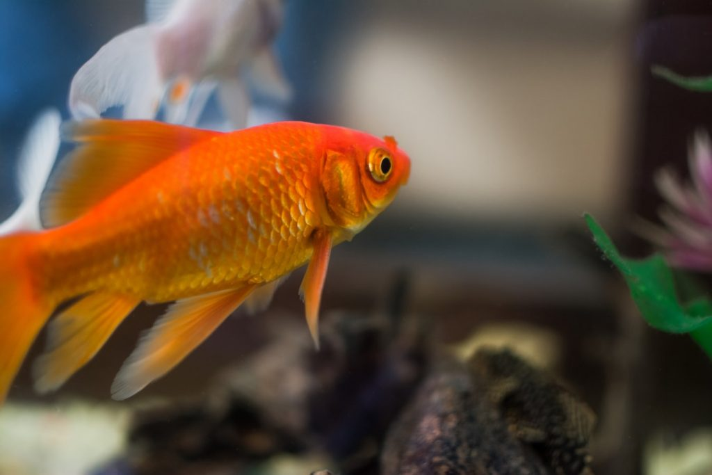 How To Clean Fish Tank Sand